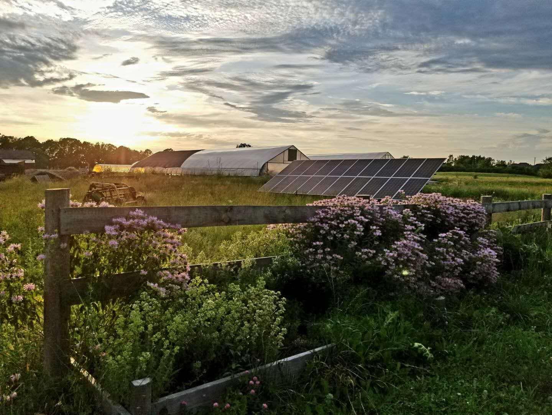 Sunset over Lavender Farm Solar Panels